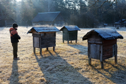 Boy looks at a hive apiary on a chilly spring morning | image credit; purchased from istockphoto.com