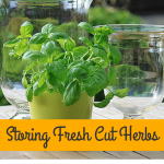 Storing Your Fresh Cut Herbs