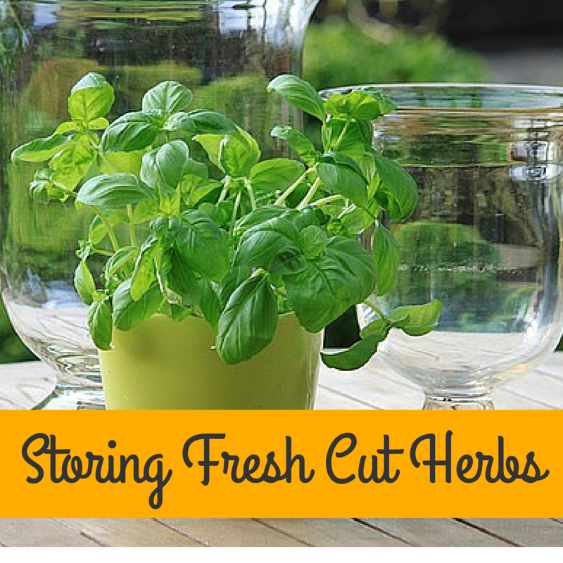 storing fresh cut herbs