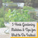 5 Beginner Herb Gardening Mistakes and Tips to Avoid Them