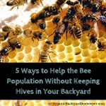 5 Ways to Help the Bees Without Keeping Hives in Your Backyard