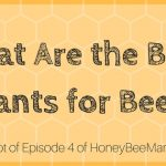 4: What Are the Best Plants for Bees? [HBM Podcast Transcript]