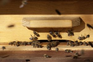 bees on outside of hive box