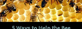 5 Ways You Can Help the Bee Population Without Keeping Hives in Your Backyard
