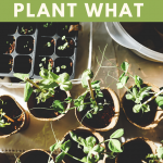 knowing when to plant what